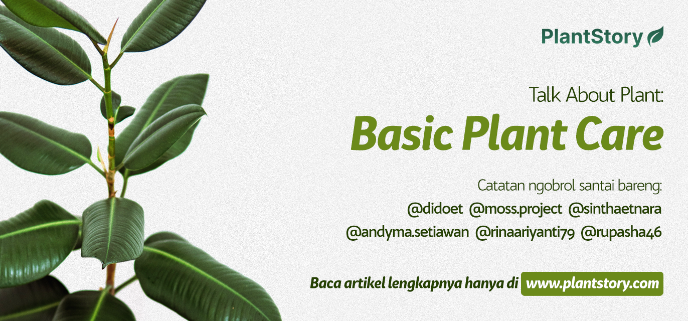 Talk About Plant: Basic Plant Care