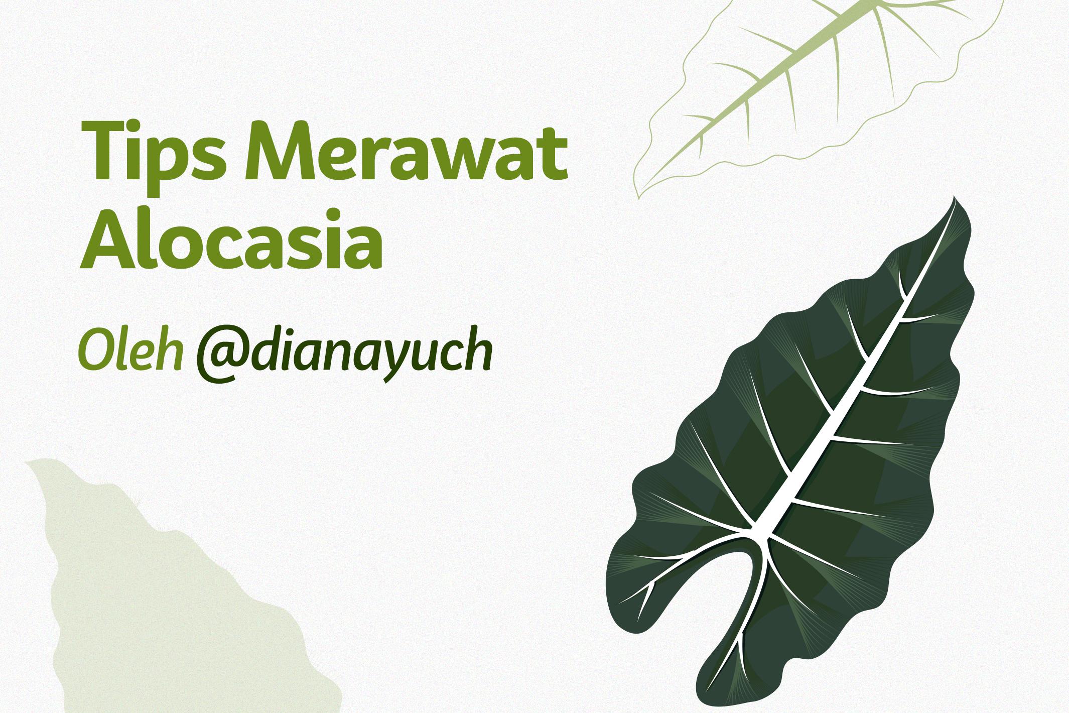 12 Tips Merawat Alocasia ala @dianayuch