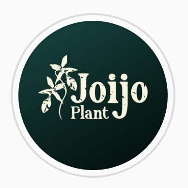 Joijo Plant