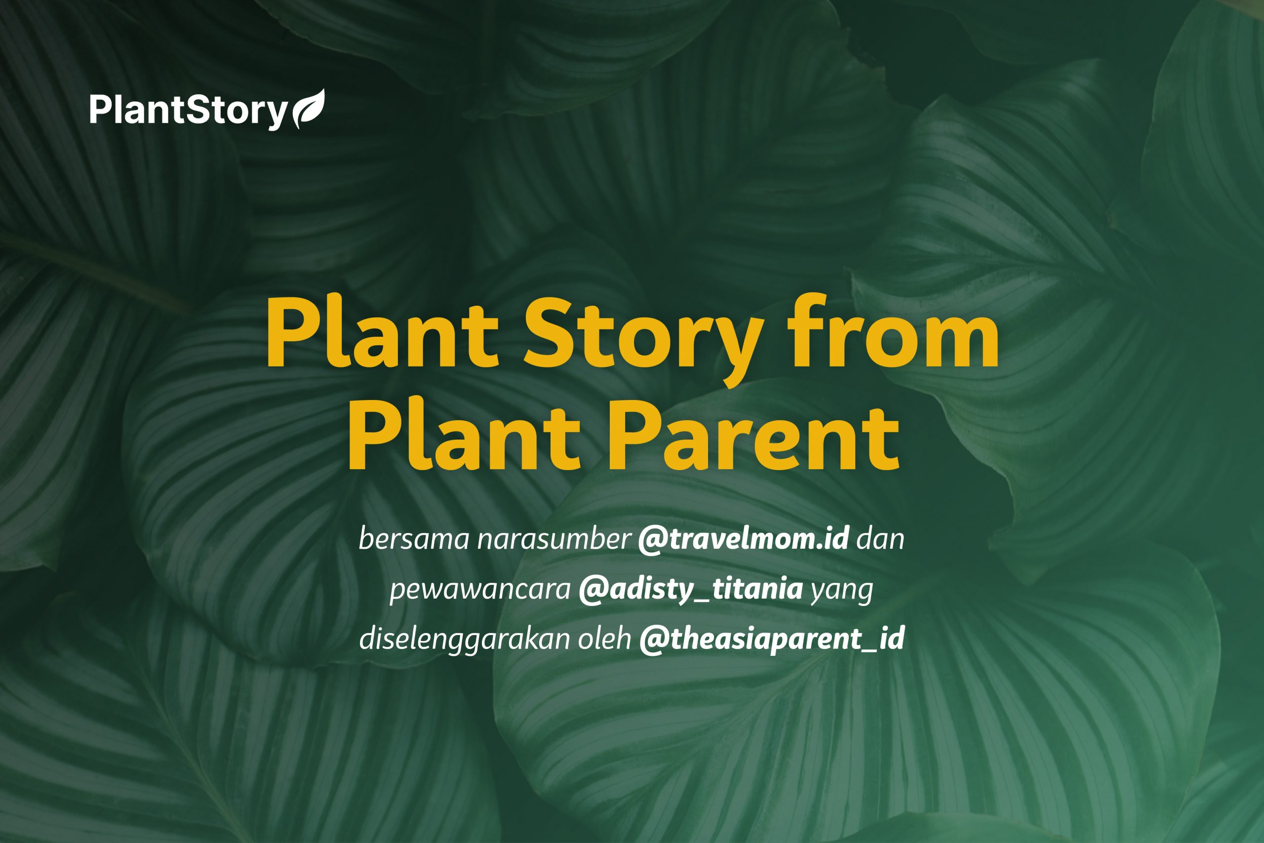 Plant Story from Plant Parent : Titi Akmar
