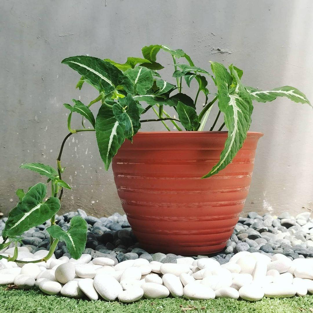 Bebi Garden